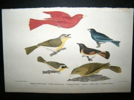 Alexander Wilson 1832 Hand Col Bird Print. Maryland Yellow Throat, Summer Red  Bird, Indigo Bird